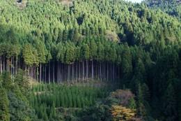 森林と植林