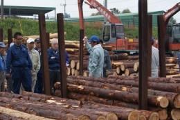 原木市場でのセリ